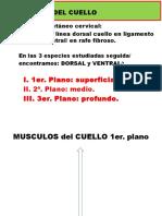 3 SISTEMA MUSCULAR CUELLO.pptx