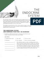 Endocrine System Coloring Workbook Endocrine System Worksheet ...