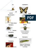 Tipos de Insectos