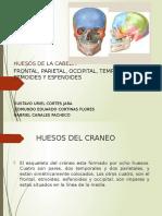 HUESOS DEL CRANEO Frontal Parietal Occipital