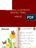 PPT INSECTE.ppt