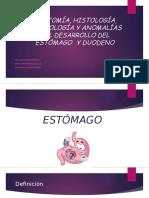 Anatomía, Histología, Estomago Duodeno