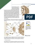 BIOLOGIA I-parte 2.pdf