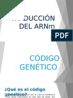 Traducción del ARNm
