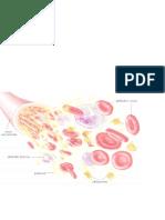 hematología conceptos