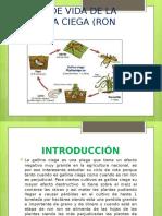 Presentación BIOLOGIA