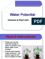 Water Potential