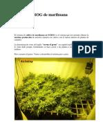 Cultivo SCROG de marihuana