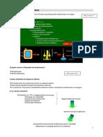 3 - Roteiro de Estudo - Endotoxemia Em Equinos