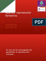 271892 Aparato Reproductor Femenino 3D