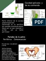 Piso y Diafracma de La Pelvis
