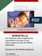 Diapositiva Bordetella