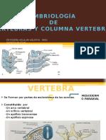 Embriologia Columna Vertebral