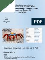 Comportamiento etológico-reproductivo del crustáceo Grapsus grapsus