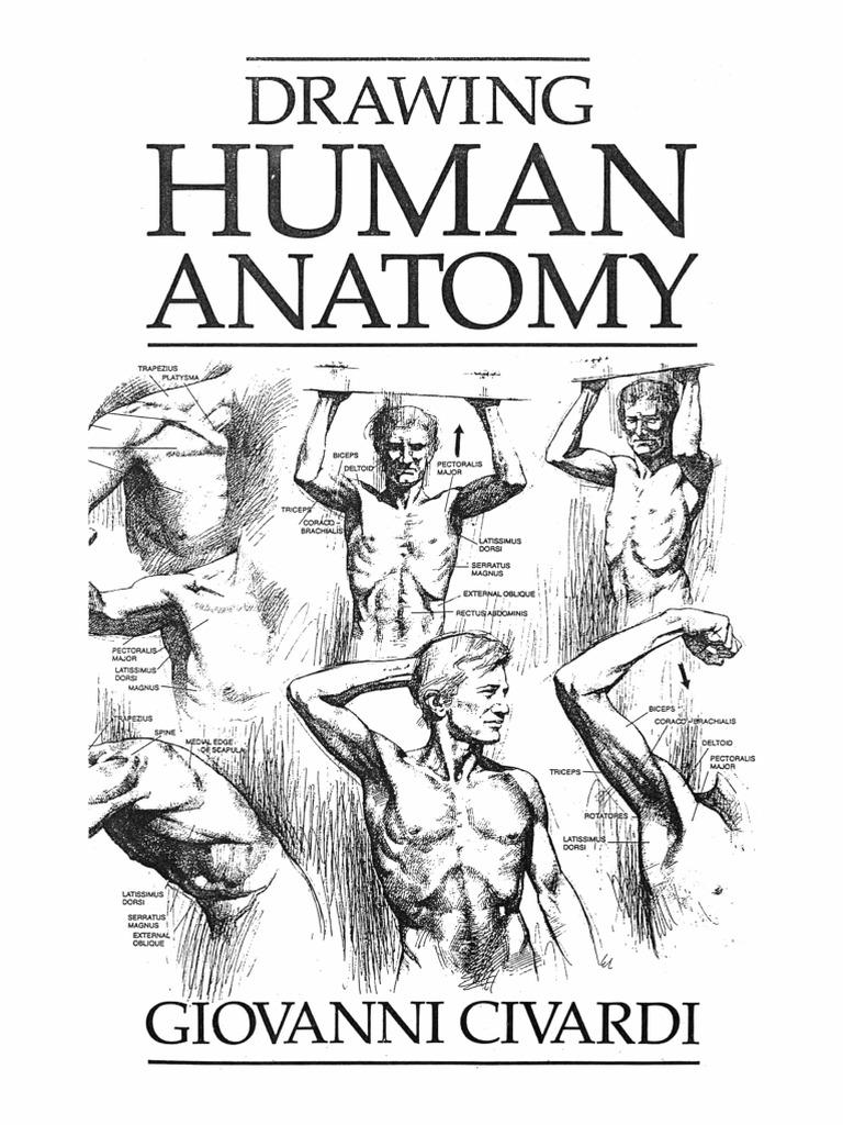 Cassell Drawing Human Anatomy