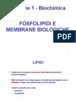 Biochimica Lezione 1 Lipidi