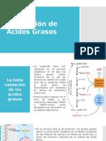 Ss-Oxidación de Acidos Grasos