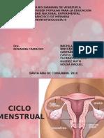 Seminario Ovogenesis y Espermatogenesis