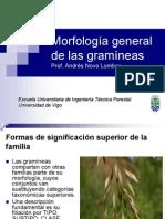 Morfologiageneral