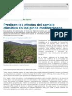 Predicen Los Efectos Del Cambio Climático en Los Pinos Mediterráneos _ Noticias _ SINC