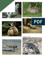 Fotos Animales Patagonicos