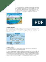 Ciclo Del Carbono Melo