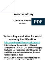 Wood Anatomy Conifer vs Eudicot Woodsprinterfriendly