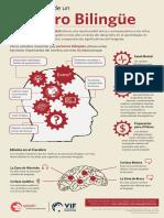 Los beneficios de un cerebro bilingüe