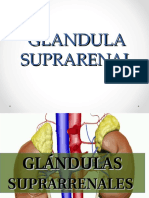 Glandula Suprarenal