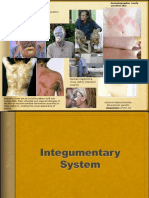 Integumentary System 2015