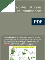 Equipo 2 Alcaloides Naturales Colinomimeticos