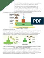 piramides ecologicas.docx
