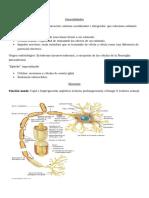 HISTOLOGÍA Sistema Nervioso resumen