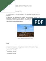Perdida de Agua Por Las Plantas Informe