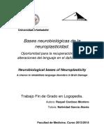 investigación neuroplasticidad
