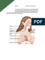 Soph PE Circulation and Respiration