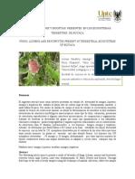 Briofitas, Hongos y Liquenes de Boyaca
