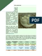 Biotecnología e Industria Alimentaria