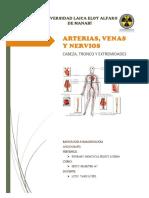 Anatomia Del Van- Angiografia