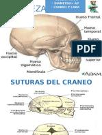 Semiología de Cabeza y cuello y órganos de los sentidos