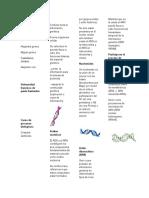 Acido desoxirribonucleico