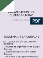 Ud 1 Organización Cuerpo Humano