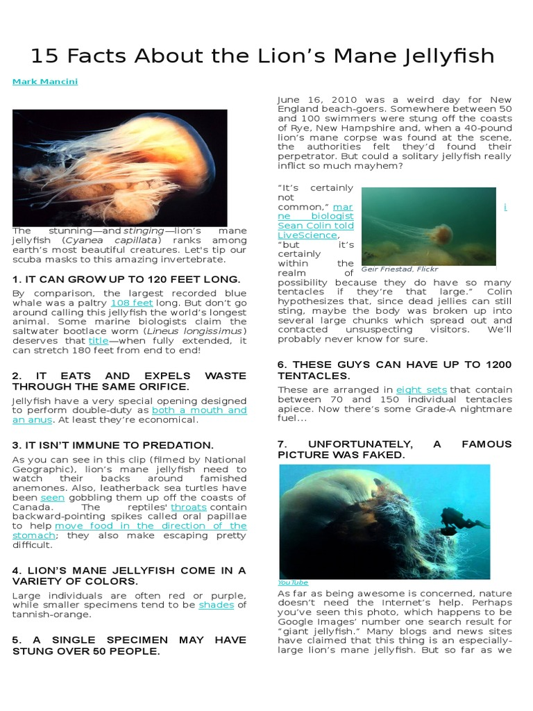 15 Facts About the Lion docx | Organisms | Nature