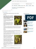 BBC Mundo - Ciencia y Tecnología - Una Planta Carnívora Que Come Ratasdfbd