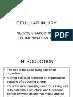 Cellular Injury