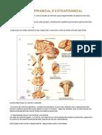 Tutoria 1 - Resumo PDF
