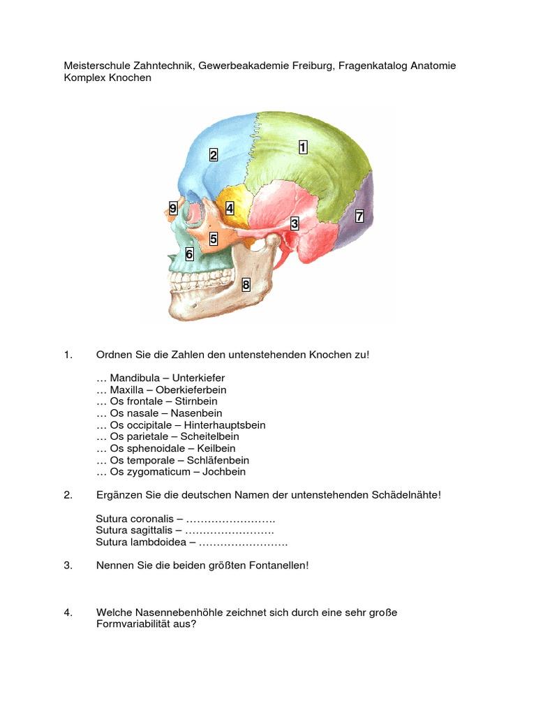 Nett Stirnbein Fotos - Anatomie Und Physiologie Knochen Bilder ...