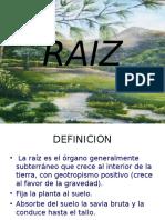 raiz-090409120626-phpapp01