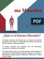Presentación 1 Musculo