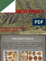 Paleobotánica Modelo